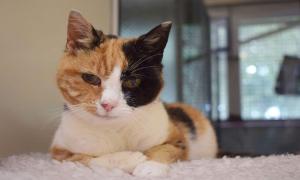 Chủ tìm thấy mèo cưng mất tích 12 năm