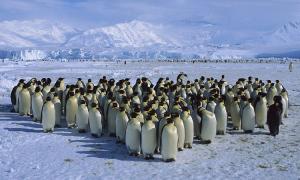 Phát hiện 11 thuộc địa ẩn giấu của chim cánh cụt