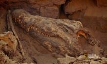 Xác ướp cá sấu nguyên vẹn sau gần 4.000 năm tuổi