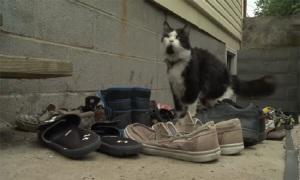 Mèo trộm dép, chủ nhân lập nhóm trên Facebook để trả