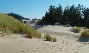 Vụ án bí ẩn 'quý bà trên đụn cát'