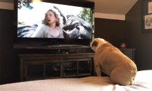 Cún cưng 'giận dữ' vì nữ chính bị King Kong bắt