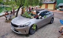Ôtô được trang trí miễn phí vì đỗ không đúng chỗ