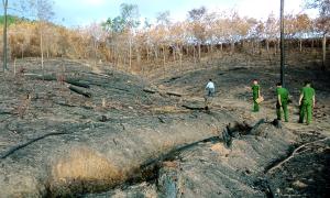 Bị phạt hơn 5 triệu đồng vì gây cháy rừng