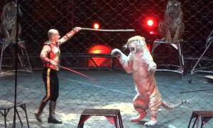 Tại sao sư tử tấn công huấn luyện viên?