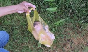 Bé sơ sinh trong túi nylon