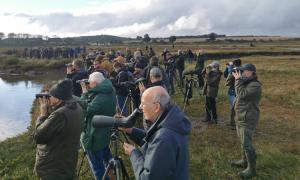 Người Anh kéo đến xem chim sẻ hiếm tái xuất sau 40 năm