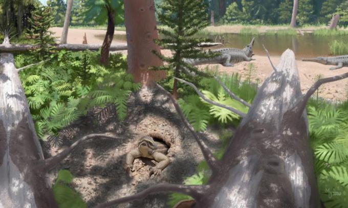 Phát hiện hóa thạch bò sát đào hang 'kỳ dị'