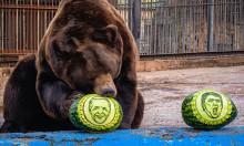 Hổ, gấu tiên đoán Biden đắc cử