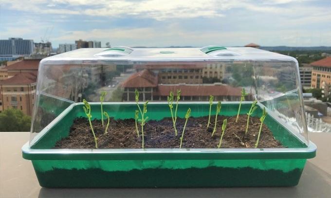 Đất tự 'tưới' nước cho cây trồng