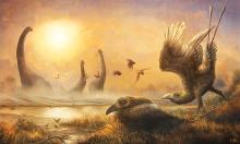 Hóa thạch tiết lộ loài 'chim răng thỏ' kỳ dị