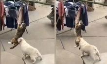 Chú chó giúp mèo ăn vụng cá