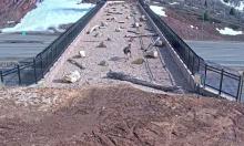 Cầu vượt 5 triệu USD cho động vật hoang dã