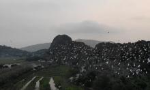 Hàng chục nghìn cò trắng bay về Kim Sơn
