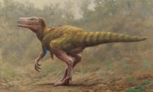 Phát hiện hóa thạch khủng long đầu tiên trên đảo Ireland