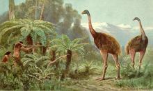 166 loài chim không biết bay đã tuyệt chủng do con người