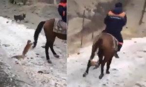 Ngựa bỏ chạy vì bị mèo bám đuôi