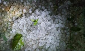 Vì sao ngày càng nhiều mưa trái mùa?