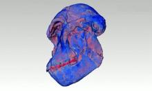 Bản quét hé lộ bí ẩn về hóa thạch vượn người