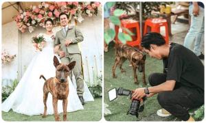Chó cưng đòi xem ảnh cưới khi chụp hình ké