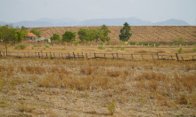 Đồng ruộng cạn khô bên hồ thủy lợi 3.000 tỷ đồng