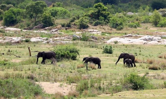 Đàn voi giết chết thợ săn trộm trong vườn quốc gia