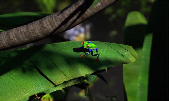 Tầm quan trọng của rừng mưa nhiệt đới Amazon