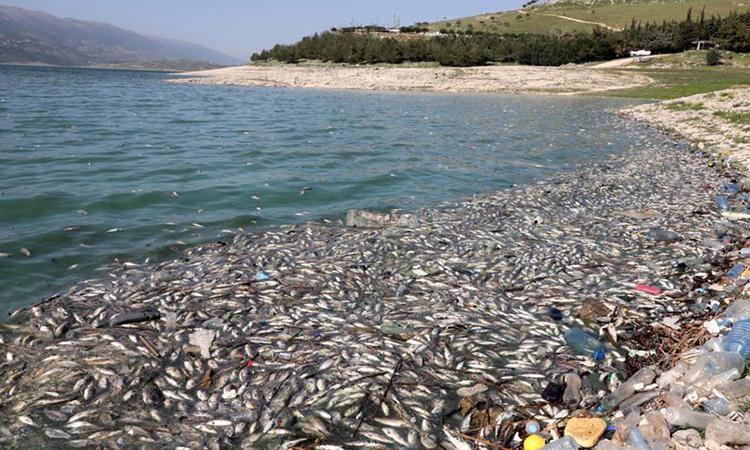 Cá chết nhiều chưa từng thấy trên hồ Lebanon