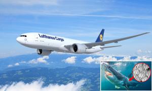 Máy bay ít phát thải lấy cảm hứng từ cá mập