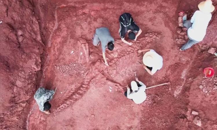 Phát hiện bộ xương khủng long hoàn chỉnh 70%