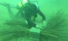 Dùng cành cọ khô khôi phục hệ sinh thái biển