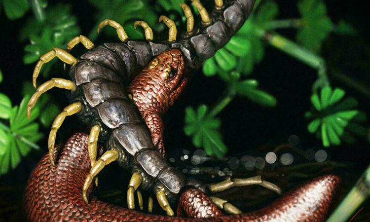 Hóa thạch 308 triệu năm tuổi của tổ tiên bò sát
