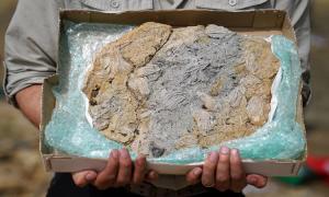 Phát hiện 'kho báu hóa thạch' kỷ Jura