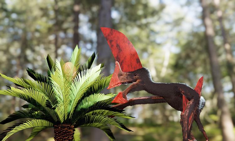 Phục dựng thằn lằn bay từ hóa thạch 115 triệu năm