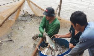 Nông dân tặng ao cá cho gian hàng 0 đồng