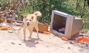 Chú chó nhảy ra khỏi tivi