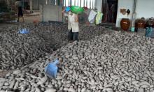 Giá nhiều loại nông sản miền Tây chạm đáy