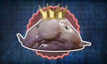 Có gì bên trong loài cá xấu nhất thế giới?