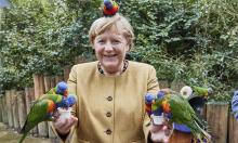 Bà Merkel bị vẹt mổ