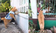 Chủ 'thở dài' vì mèo thích hóng chuyện
