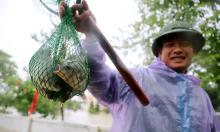 Bắt cá đồng mùa lũ