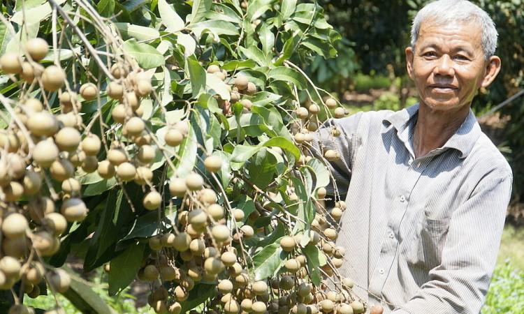 Nhiều nông sản miền Tây tăng giá mạnh