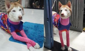 Chó cưng thờ ơ khi được cô chủ diện đồ